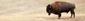 Naturperlen aus Büffelknochen und Horn